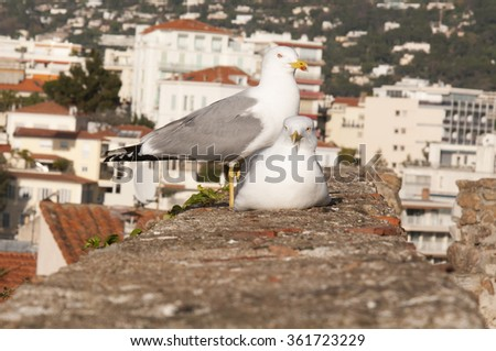 lovely seagulls in Cote D'azur