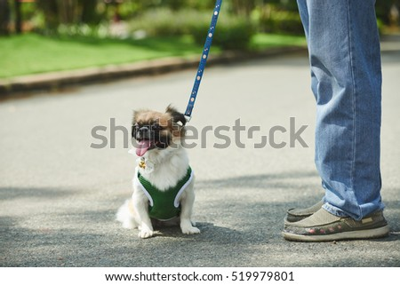 Lovely small dog in overall sitting outdoors