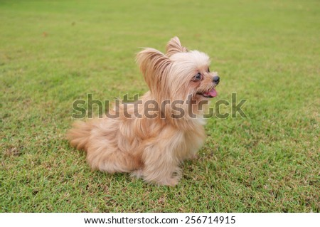 lovely small mixed breed dog playing in the garden - stock photo