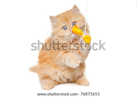 Lovely small red persian kitten playing with yellow bow sitting on white background - stock photo