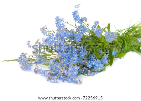 lovely spring flowers - forget-me-not bouquet