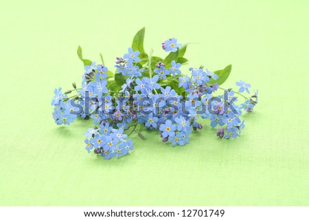 lovely spring flowers - forget-me-not on green