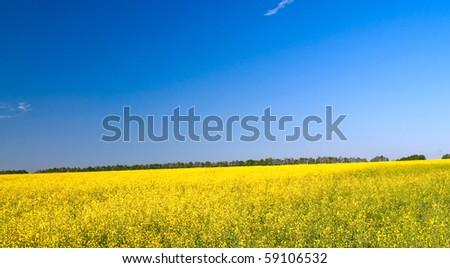 Lovely sunbeams above golden rapefield. - stock photo