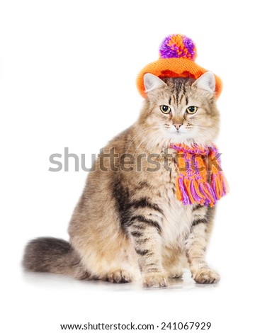 Lovely tabby cat dressed in warm knit hat and scarf - stock photo