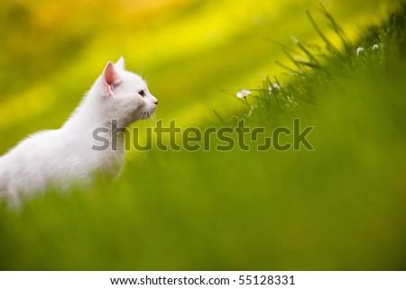 Lovely white kitten sitting in the grass. - stock photo