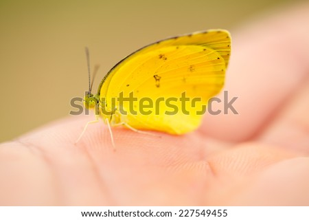Lovely yellow butterfly on soft hand - stock photo