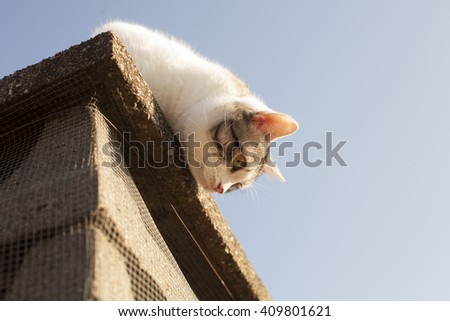 lovely young grey &withe cat on the roof in a sunny day  - stock photo