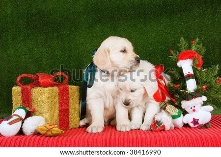 Loving Golden Retriever puppies with Christmas tree, gift and toys - stock photo