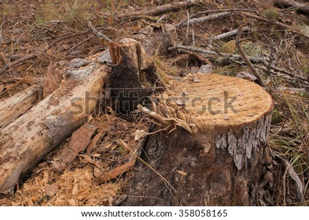 Low angle closeup of freshly cut and frayed tree stump with leftover branches in background - stock photo