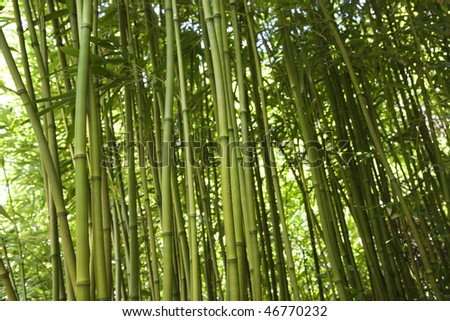 Low angle cropped view of green stalks of bamboo. Horizontal shot.