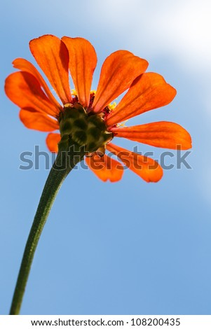 Low angle of orange flower with blue sky - stock photo