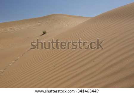 Low angle shot looking up at pristine sand dunes in the desert in the United Arab Emirates against a blue sky