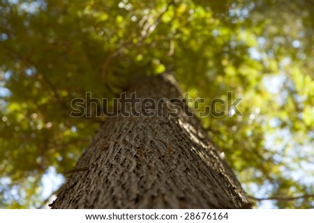 Low-Angle view near cedar tree trunk - stock photo