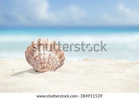 Low angle view of a scallop shell in the sand beach of the Caribbean sea