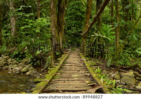 Low angle view of a wooden bridge in the Ecuadorian jungle. - stock photo