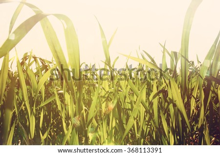 low angle view of fresh grass against blue sky with clouds. retro filtered  - stock photo