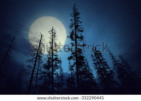 Low angle view of spooky forest with dark blue sky and big full moon - stock photo