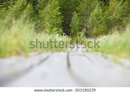 Low angle view of wooden planks goes to the distance to the evergreen forest - stock photo