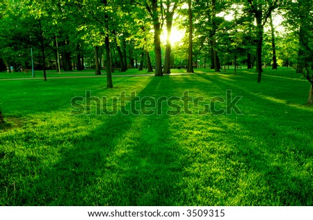 Low setting sun in green park casting long shadows - stock photo