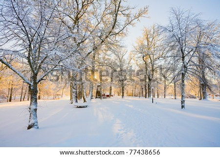 Low Sun in the winter - stock photo