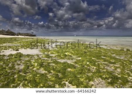 Low tide in Zanzibar - stock photo
