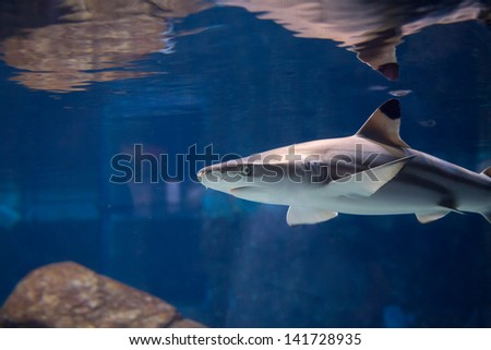 Low view of a shark under the water. - stock photo