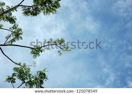 low viewpoint of branches with white clouds and blue sky background - stock photo