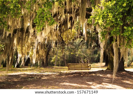 Lowcountry South Carolina Spanish Moss Drapsed Live Oak - stock photo