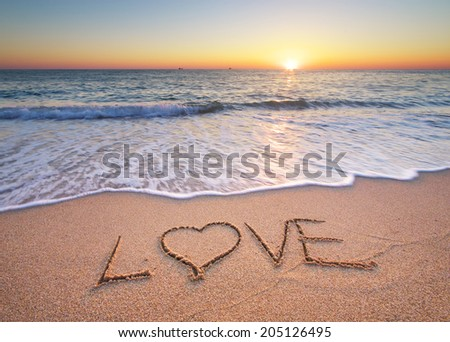 Lowe on the sea sand. Nature composition. - stock photo