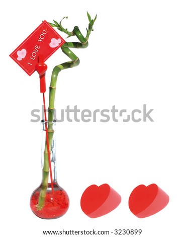 lucky bamboo for lover, mothers-day or fathers-day - stock photo