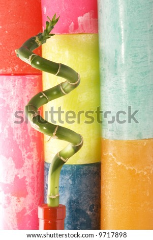lucky bamboo in front of colorful background - stock photo