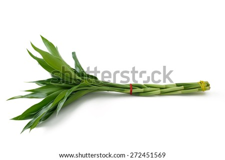 lucky bamboo isolated on white - stock photo