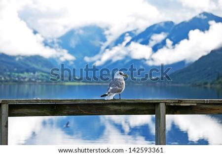Lucky bird - stock photo