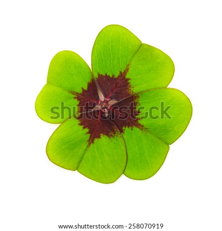 Lucky Four-leaf clover leaf isolated on white - stock photo