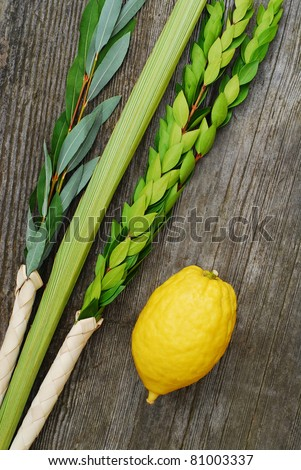 Lulav and Etrog, symbols of the Jewish festival of Sukkot - stock photo