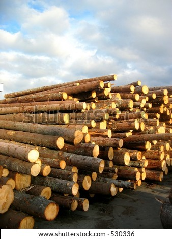 Lumber logs - stock photo