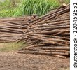 lumber woods piled together - stock photo