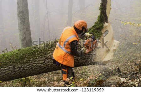 lumberjack at work in a misty forest - stock photo