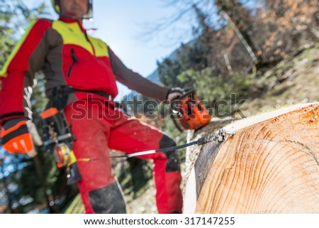 Lumberjack cutting and measuring a tree in forest Lumberjack logger worker in protective gear cutting firewood timber tree in forest with chainsaw - stock photo