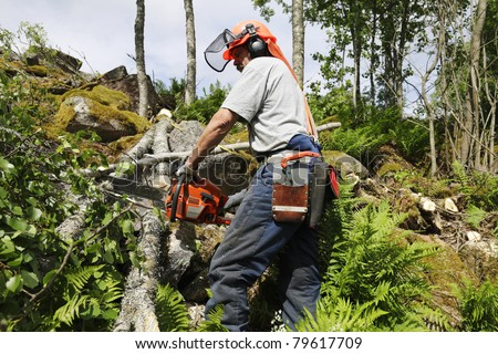 lumberjack, forest worker in action, sharpness on main-parts such as chainsaw, helmet and sidebag. - stock photo