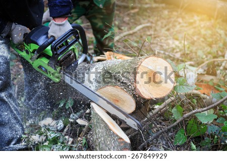 Lumberjack logger worker cutting firewood timber tree in forest with chainsaw in mountain. - stock photo