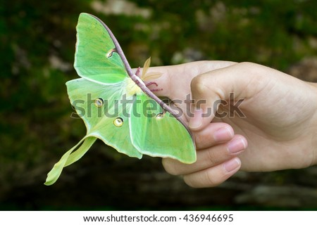 Luna Moth on hand