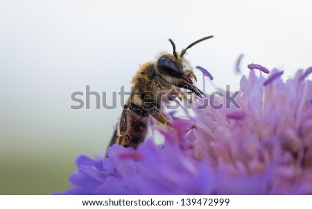 Lunch on purple flower
