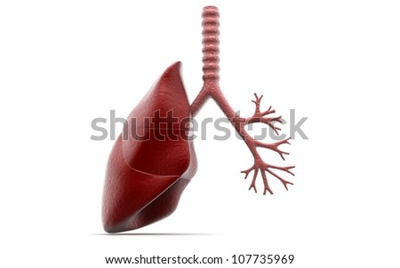 lung and bronchi - stock photo