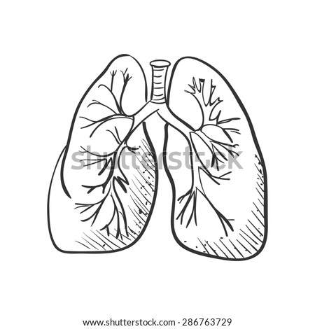 lungs sketch cleaning stock vector 250456342 shutterstock 4909