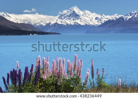 Lupins on the shore of Mt.Cook, New Zealand - stock photo