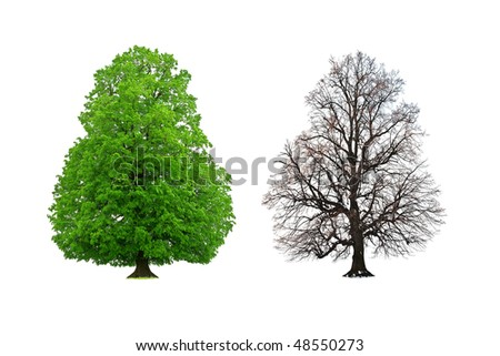 lush and nude tree isolated on white - stock photo