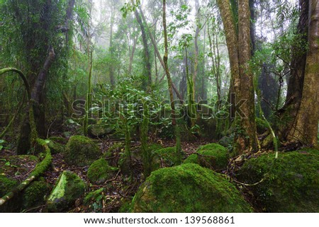 Lush australian rainforest - stock photo