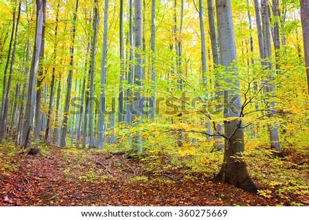Lush autumnal forest in Bükk mountains - stock photo