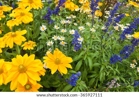Lush blooming flower bed with colorful mix of summer flowers - stock photo